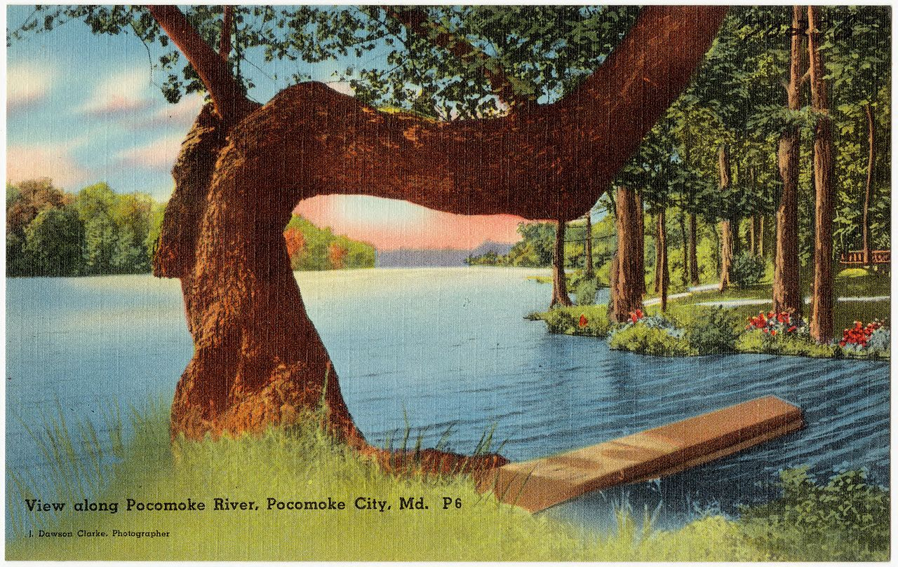 View_along_Pocomoke_River,_Pocomoke_City,_Md_(70296)